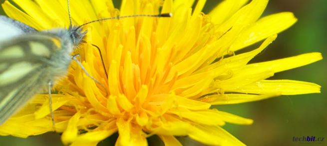 Kytička a motýl