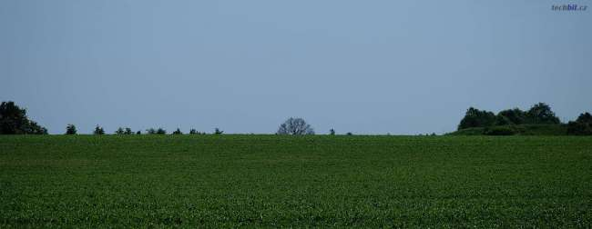 Dub v polích